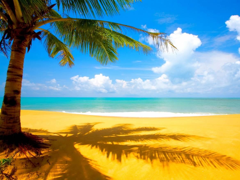 paisajes-playas-palmeras.jpg