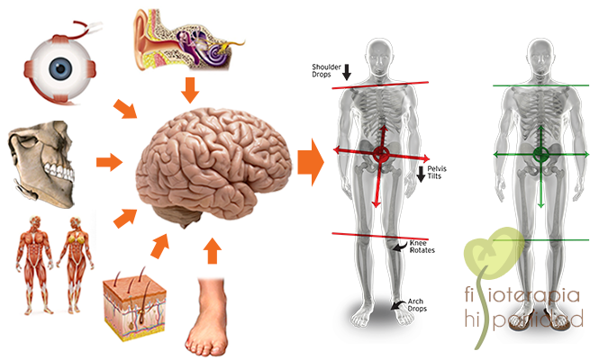 Receptores y posturología