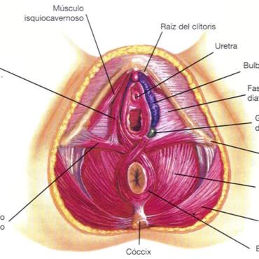 ¿Qué es el Suelo Pélvico?